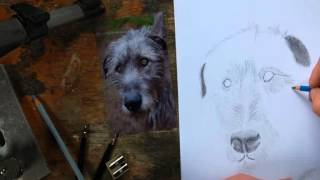 Drawing the Wolfhound