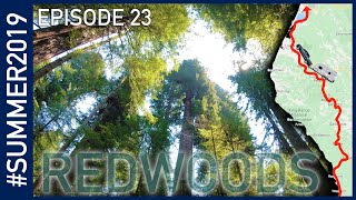 California Redwoods - #SUMMER2019 Episode 23