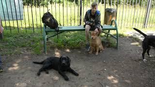 Социализация собак - дрессировочная площадка На канале