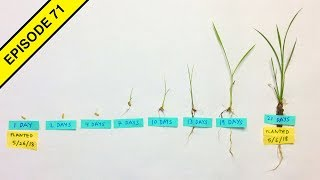 Our Rice Plants Growth Stages are Amazing!