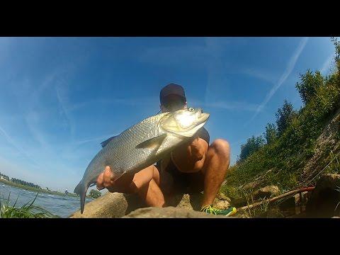 Rapfenwahnsinn - Rapfen angeln mit Livebiss