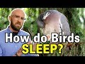 How Do Birds Stop From Falling Off Branches While They Sleep?