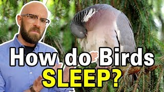 how-do-birds-stop-from-falling-off-branches-while-they-sleep