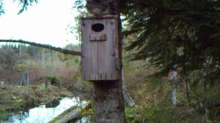 Woodduck Nesting Box