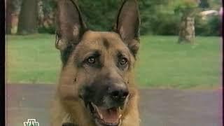 """""""Играя с огнём"""" - Полицейский Кэттс и его собака"""