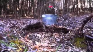 那須野が原某所...落ち葉溜めの中を掘ってみるとカブトムシの幼虫が出て...