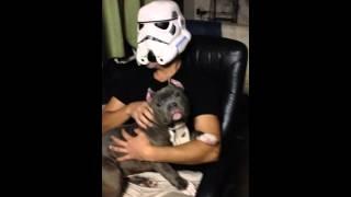 SW ペットの犬を撫でるストームトルーパー.