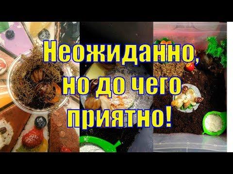 VLOG/ Любимый автосервис/ Свинки в Мурманске СПАСИБО!