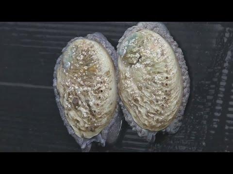 Фермы морского ушка в ЮАР пытаются найти баланс между спросом и экологией (новости)