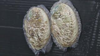 Фермы морского ушка в ЮАР пытаются найти баланс между спросом и экологией (новости)(, 2017-05-05T04:40:55.000Z)