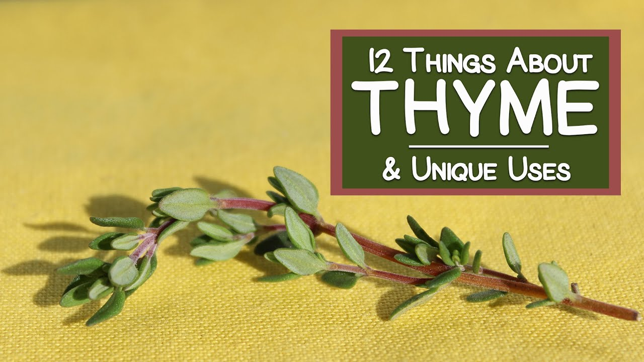 Download 12 Things About Thyme and Its Unique Uses
