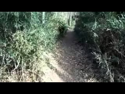 Popular Videos - Ehime Prefecture & Vehicles