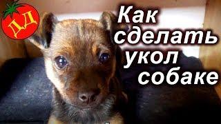 як зробити щеплення від чумки собаці