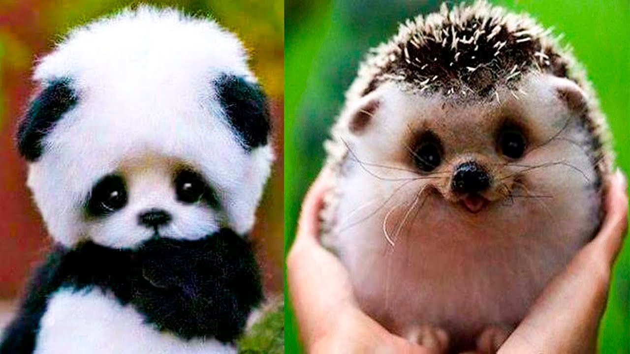 12 Cutest Baby Animals Youtube
