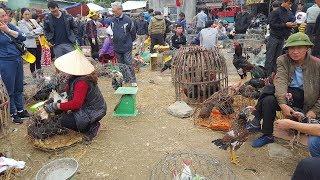 Chợ chim cảnh thú hoang động vật hoang dã - Birds Market
