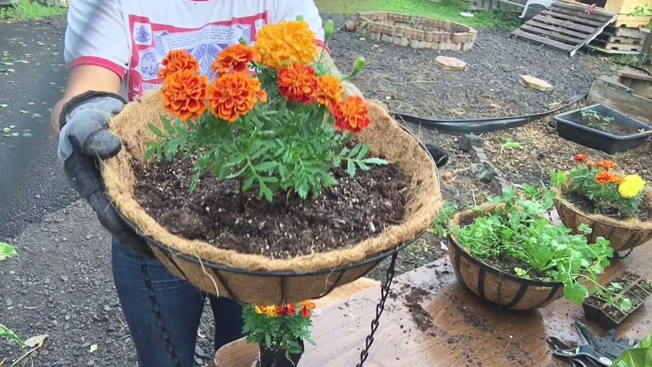 Herb and Marigold Hanging Baskets DIY Herb