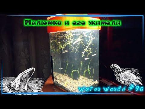 Water World #96 / Самый маленький аквариум и его обитатели