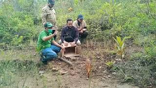 Saatnya Satwa Pelanduk Napu kembali ke hutan