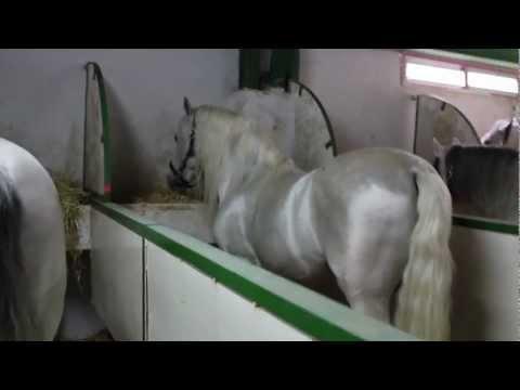 Красивая испанская  лошадь!!!!!!
