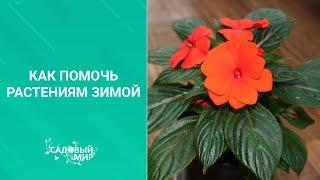 Как помочь растениям зимой