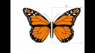 Symmetria ja peilikuva