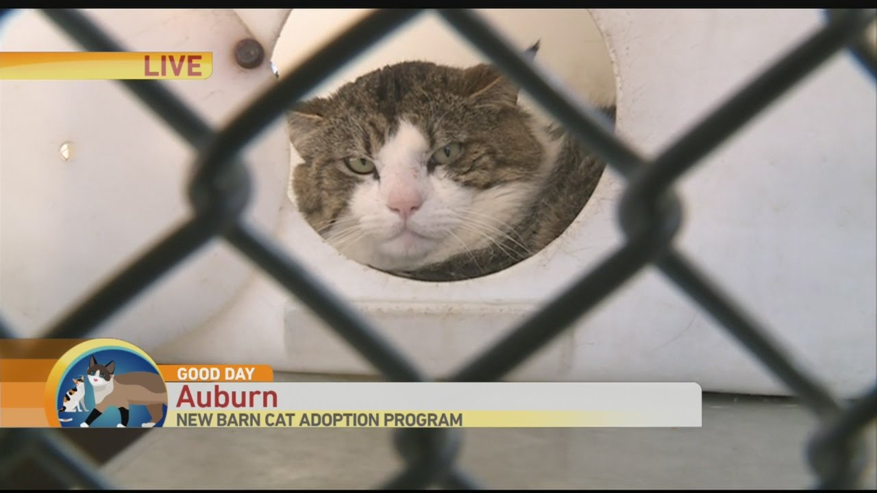 Aegean Cat Adoption