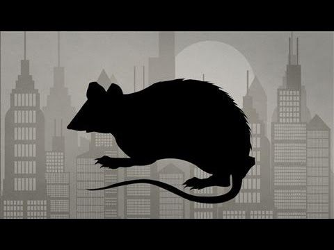 How Many Rats Does New York City Have? - YouTube