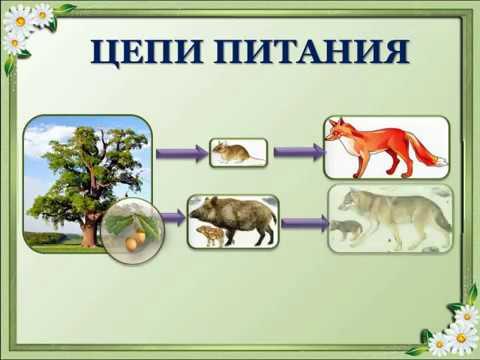 Презентация к уроку биологии по теме: Цепи питания