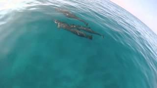 Wild Dolphin Swim with Kona Ocean Adventures