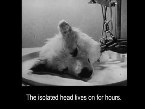 In 1940s, Russian scientists kept a dog's head alive for a few hours. (Graphic)