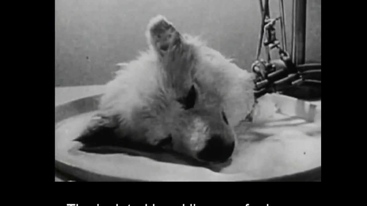 In 1940s, Russian scientists kept a dog's head alive for a ...
