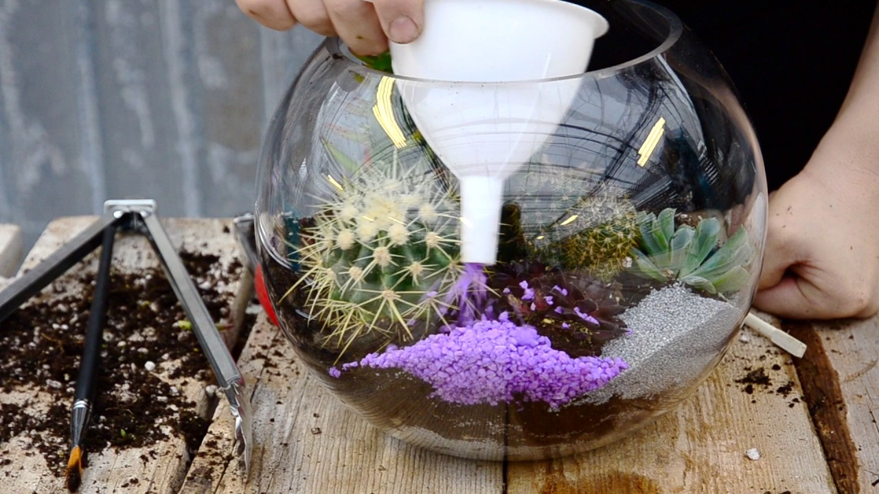 Succulent And Cacti Fish Bowl Terrarium West Coast Gardens
