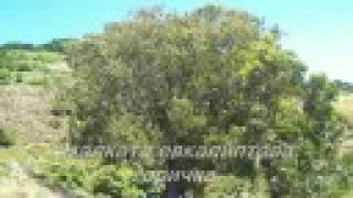 Ishtar-Horchat hai caliptus(BG translation)