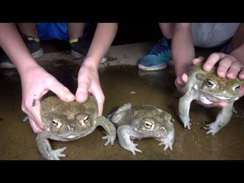 Ep2. Dragons Of The West & Crazy Featherd Frogs Jump Poor Bird. Travel, Herping, Fishing, Fun, 4K.