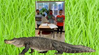 Why Are the Everglades Important?
