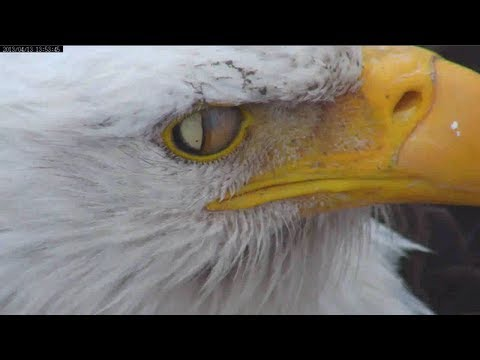 Mnbound Eagle Eye 4 14 13 Youtube