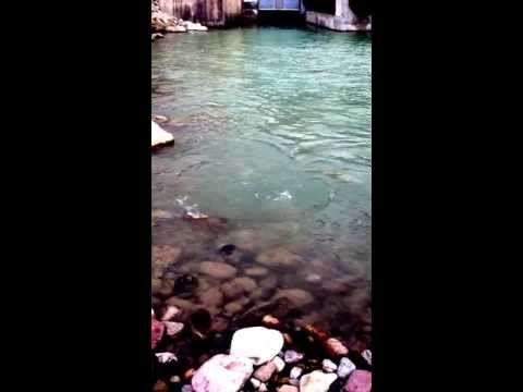 Trout fishing Waterton reservoir