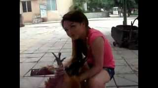 Repeat youtube video Woman Killing Chicken