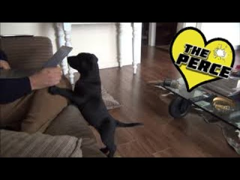 Valuable Training Your Dog Tips That Really Work 2