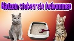 Katze stubenrein bekommen! So gewöhne ich meine Katze ans Katzenklo
