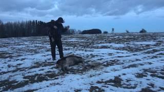 Polowanie na jelenie. Deer Hunting 2019