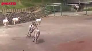 Animals sex new video(1)