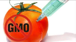 GMO Foods Are Killing Us? Warning!
