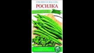Семена фасоли оптом(, 2013-05-06T13:01:52.000Z)
