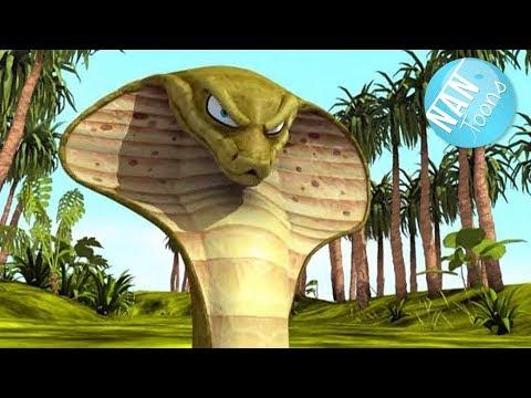 rikki-tikki-tavi- -the-jungle-book- -cartoon-for-kids- -animation-for-children- -ep.-1