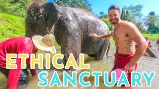 ELEPHANTS EVERYWHERE! Loving on Elephants @ Chiang Mai's Elephant Rescue Park