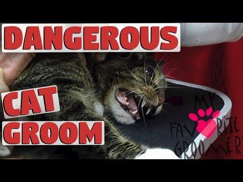My Cat Will Bite You Dangerous Groom
