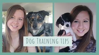 Positive Reinforcement Training for Dogs - My Top Dog Training Tips!