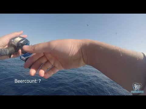 Rock Fish And Skipjack Close To Newport Beach. Ep. 1