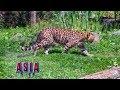 Granby Zoo - Asia Trail - Granby - Quebec - Canada
